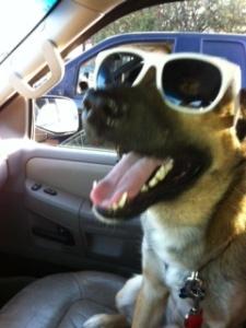 Maverick wearing sunglasses